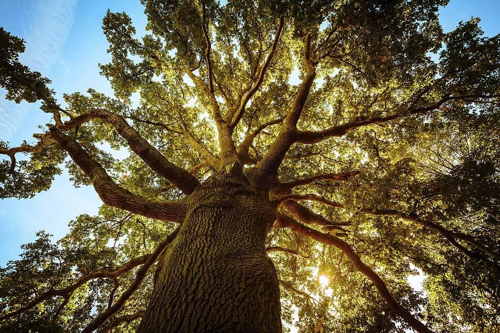 Was bedeutet es, von einem Baum zu träumen? 2