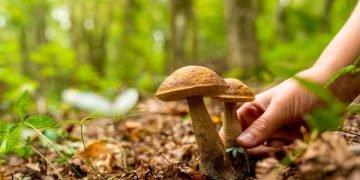 sonhar com cogumelos