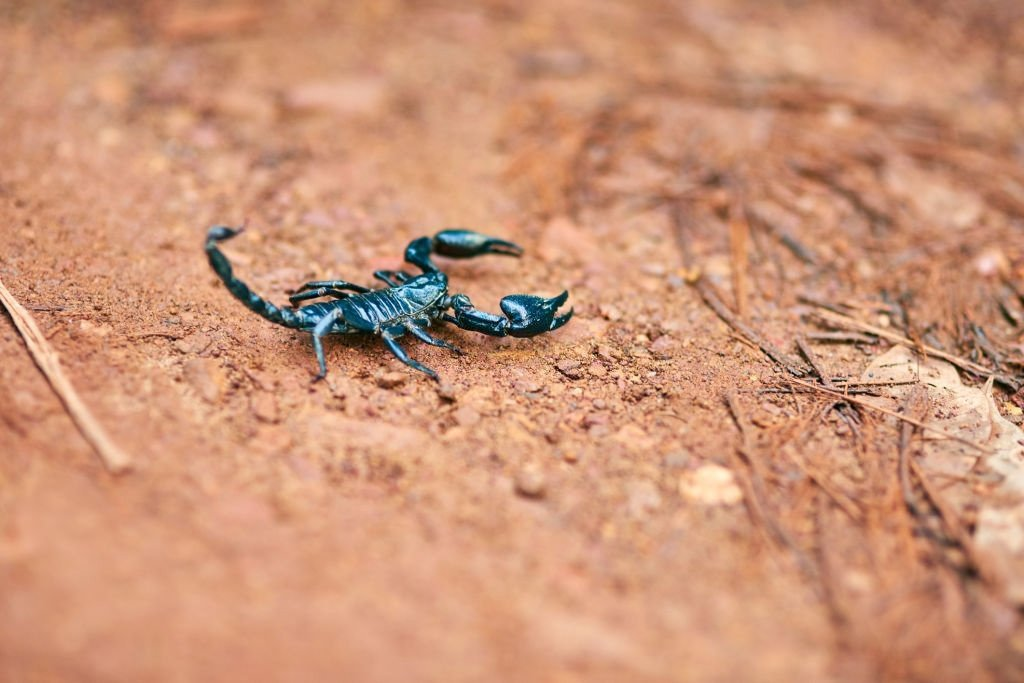 Was bedeutet es, von Skorpion zu träumen? 1