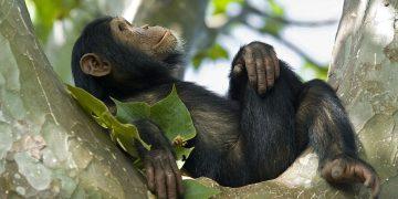 Sonhar com Macaco