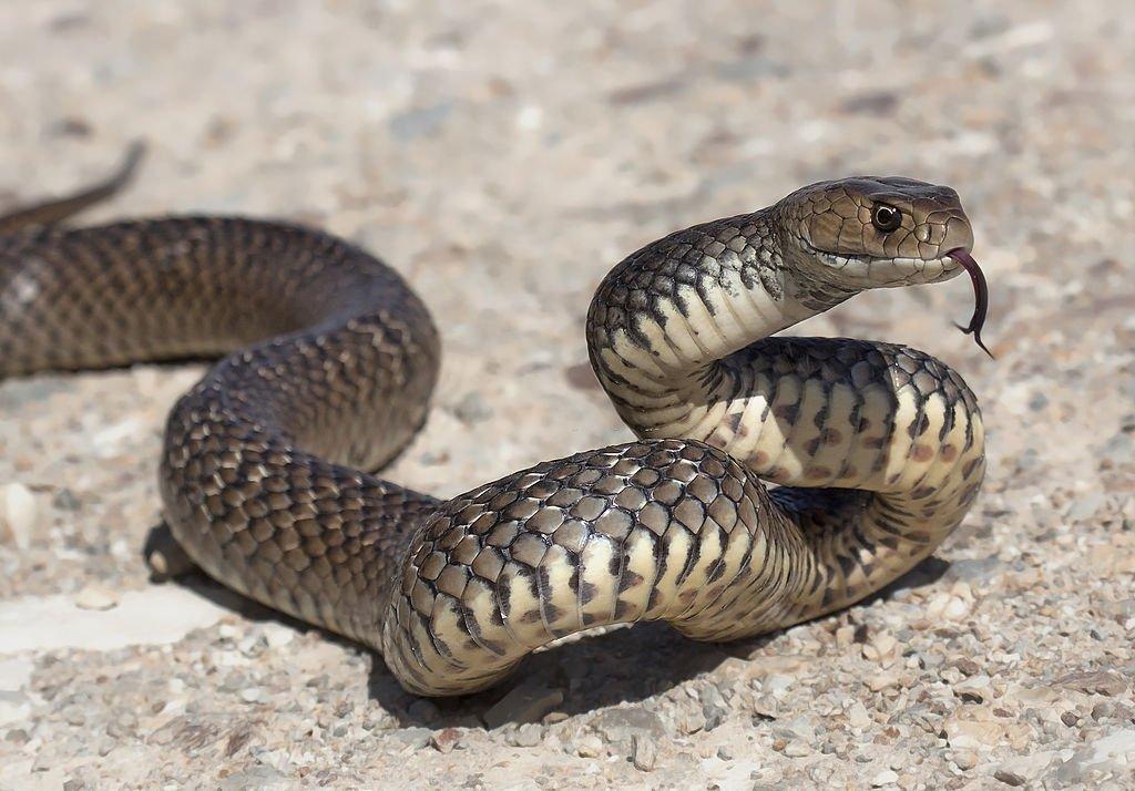 Braunen Schlange - Bedeutung Und Symbolik Von Träumen 2