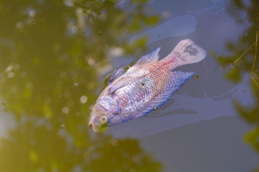 Toten Fischen - Bedeutung Und Symbolik Von Träumen 2
