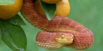 Roten Schlange - Bedeutung Und Symbolik Von Träumen 13