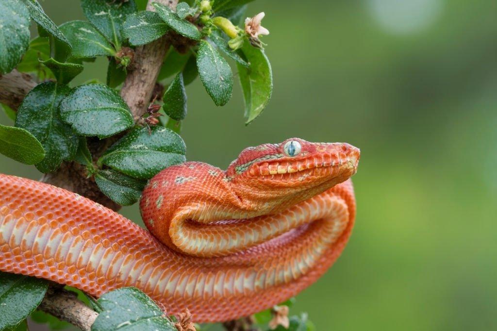 Roten Schlange - Bedeutung Und Symbolik Von Träumen 2